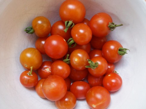 home grown salad tomatoes