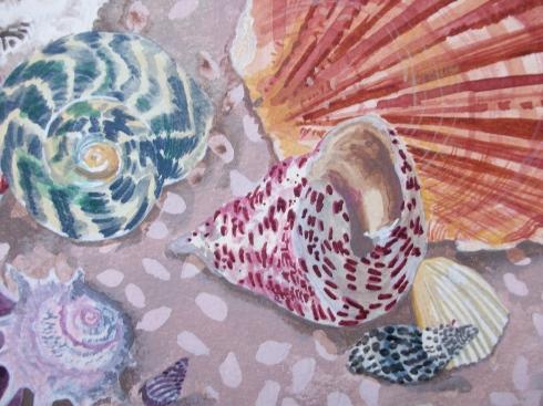 Shell still life - detail