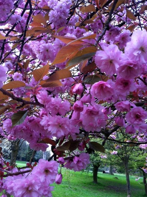 pink_blossom_closeup