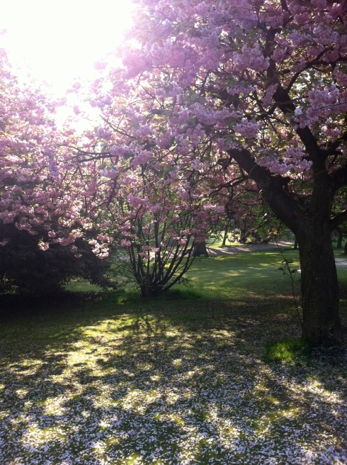 sunlight_through_blossom_tree
