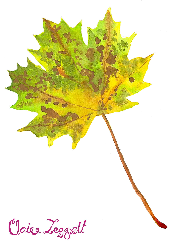 Maple Leaf Pathway Beautiful: Paint Drops Keep Falling
