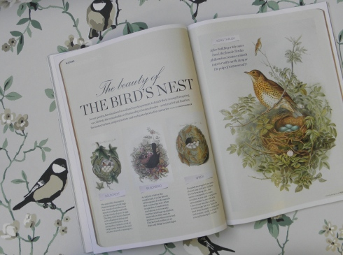 Country_Living_Bird_article_2013
