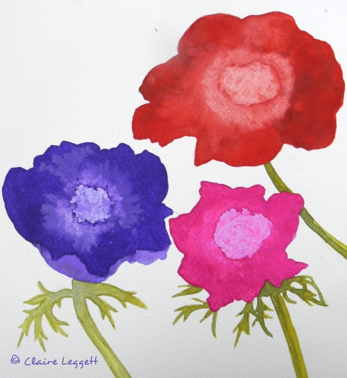 anemone_watercolours