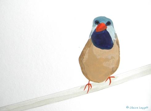bib_bird1.jpg
