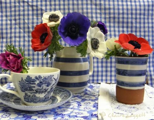 blue_check_anemones_setup.jpg