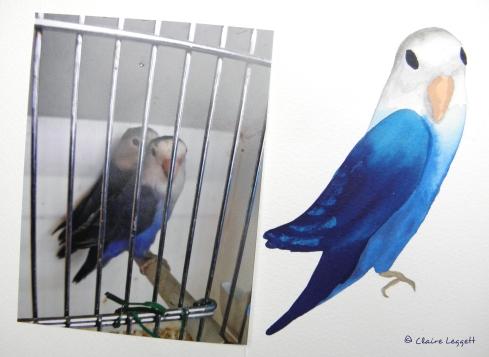 lovebirds_72.jpg