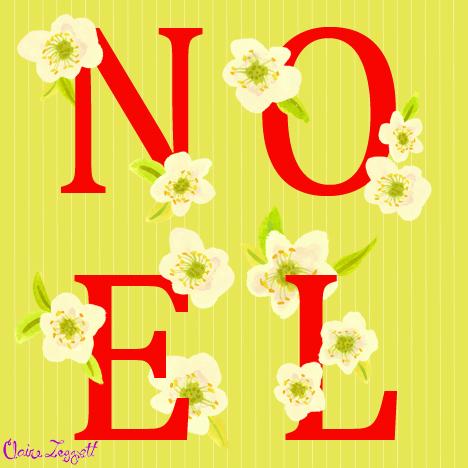 Noel_roses