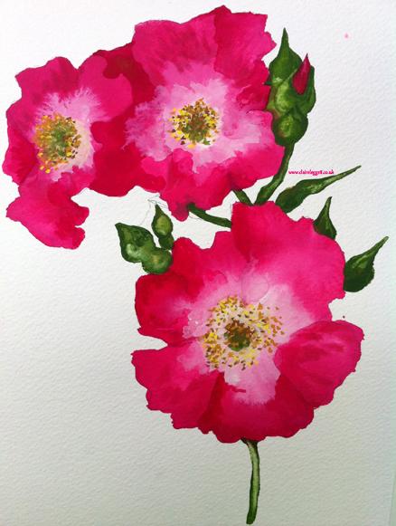 briar rose 2