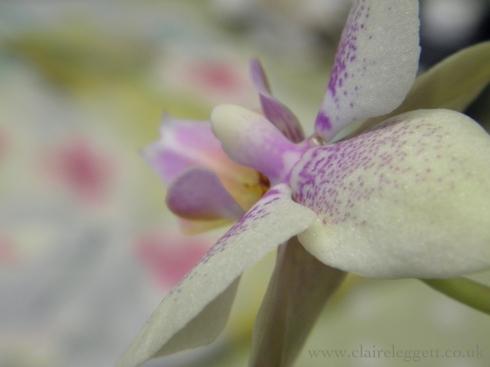 orchid_macro_2