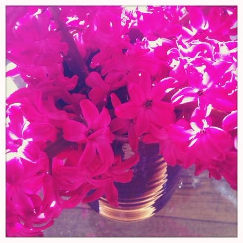 claire_leggett_hyacinths 1