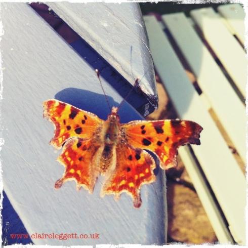 claire_leggett_butterfly