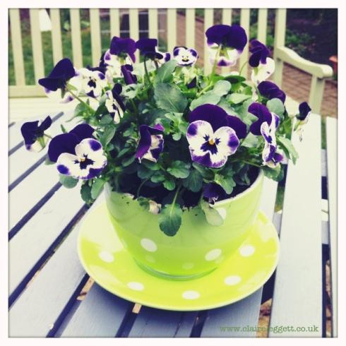 claire_leggett_pansy_teacup
