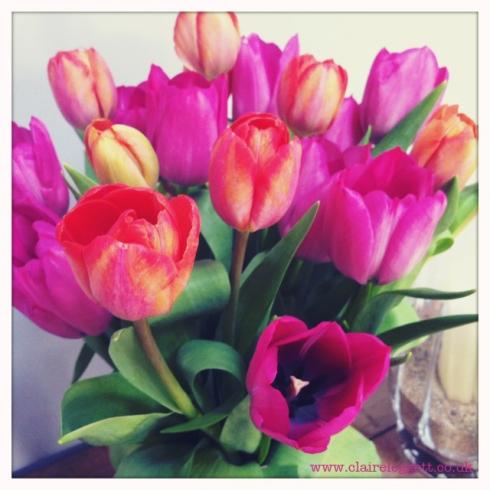 claire_leggett_tulips