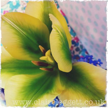 claire_leggett_spring_green_macro