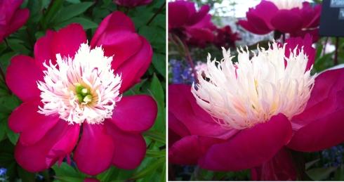 flower fest 3