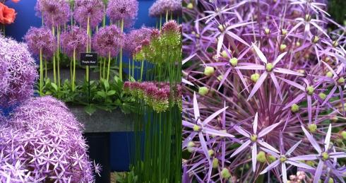 flower fest 4