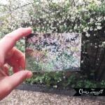 Mini Blossom inhand