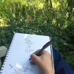 drawing foxgloves