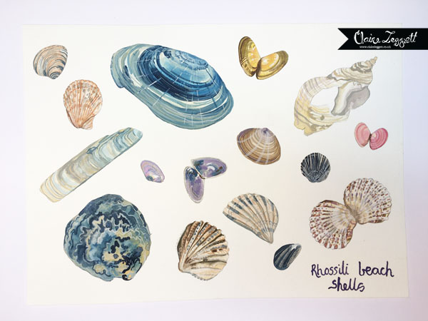 This image has an empty alt attribute; its file name is shells-c2a9claire-leggett-1-2.jpg